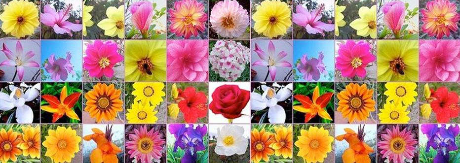 Resultado de imagen de flores bach